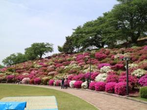 福井犬連れ観光旅行西山公園
